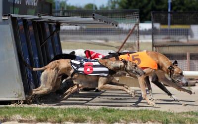 reyhound-racing.